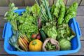 basket of produce from wheel barrow farm
