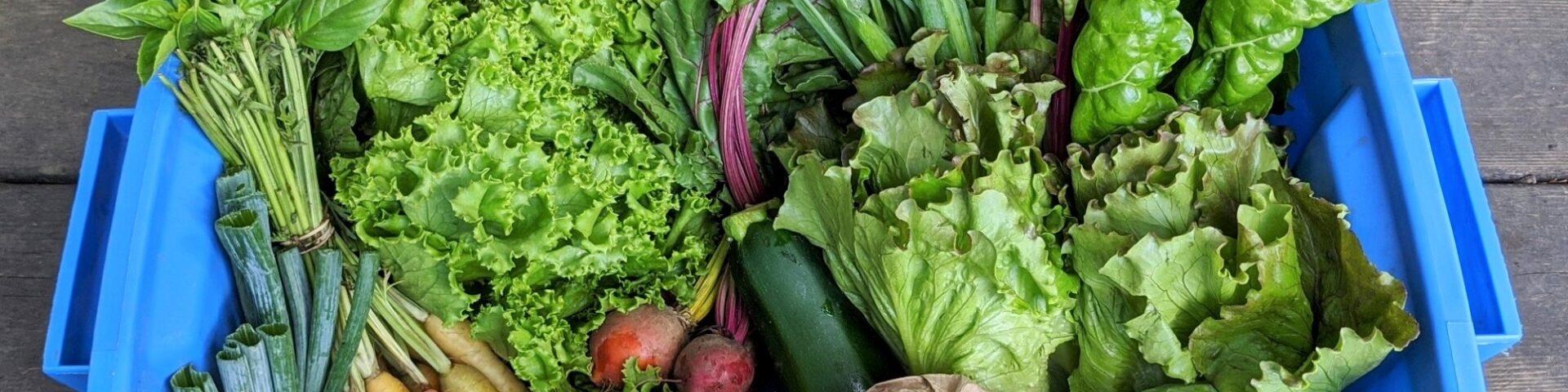 basket of produce from wheel barrow farm